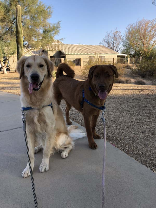 walking your dog, sonoran dog care, dog training, dog care
