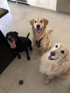 dog playdates, sonoran dog care