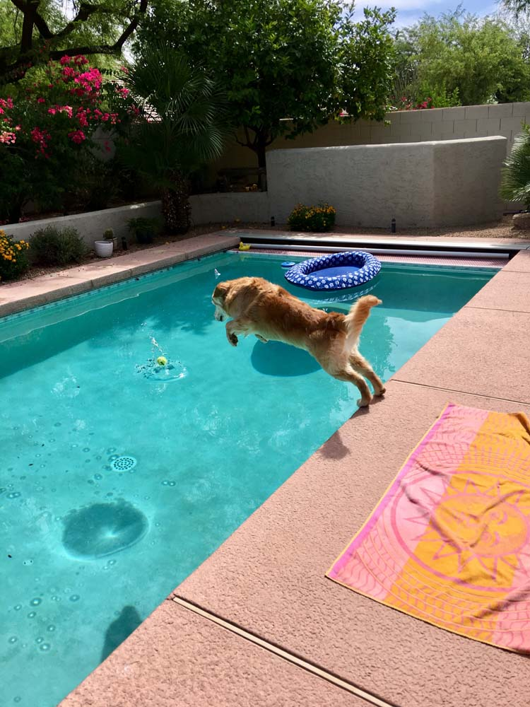 dog swim lessons, dog care phoenix, dog care scottsdale, sonoran dog care